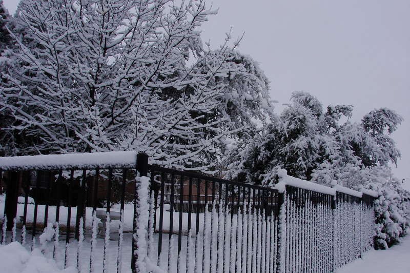 Snow on a wrought iron fence and trees.